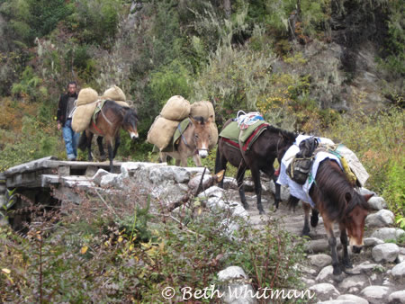 Horses carrying our goods along trek route