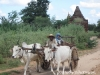 Oxcart in Bagan, Burma