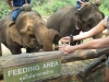 Feeding elephants near Chiang Mai