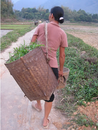 Woman with basket in rice fields