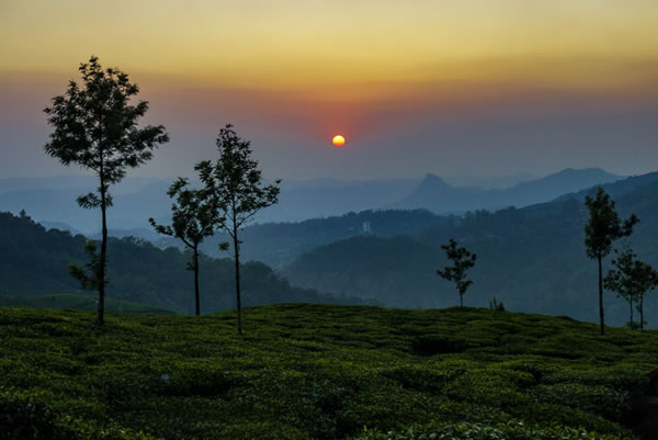 Munnar Tea Plantations India Tour