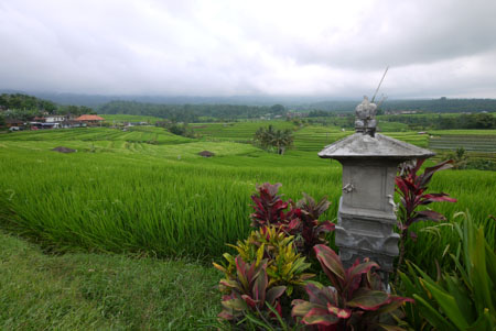 Rice Fields Temple