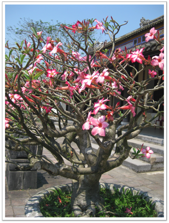 Flowering tree in Forbidden City