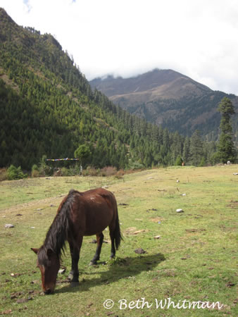 Horse along the trek