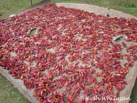 Chili peppers drying in Sakten