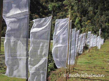 Tall prayer flags in Sakten