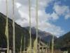 Prayer flags along trek