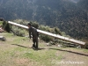 Wood Carrier in Laya