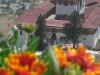 Flowers with dzong