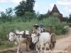 Oxcart in Bagan, Burma