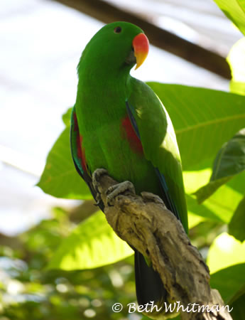 Parrot at Botanical Gardens in Port Moresby