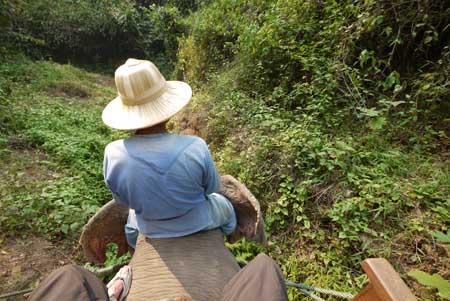 Elephant mahout near Chiang Mai