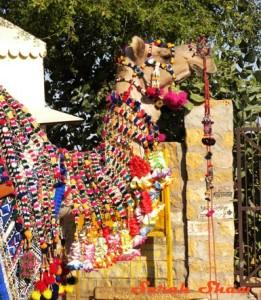 Camel-Rajasthan-India