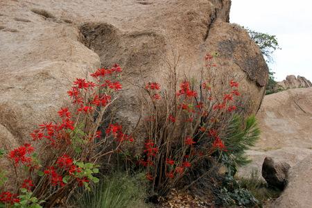 Santa Fe flowers
