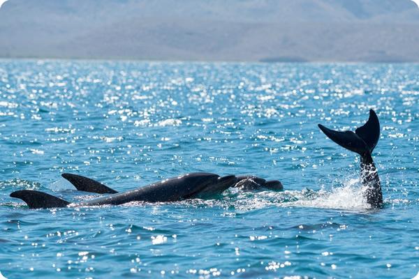 Dolphins Baja Tour